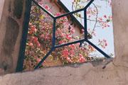 """""""原野""""里的一朵野花"""